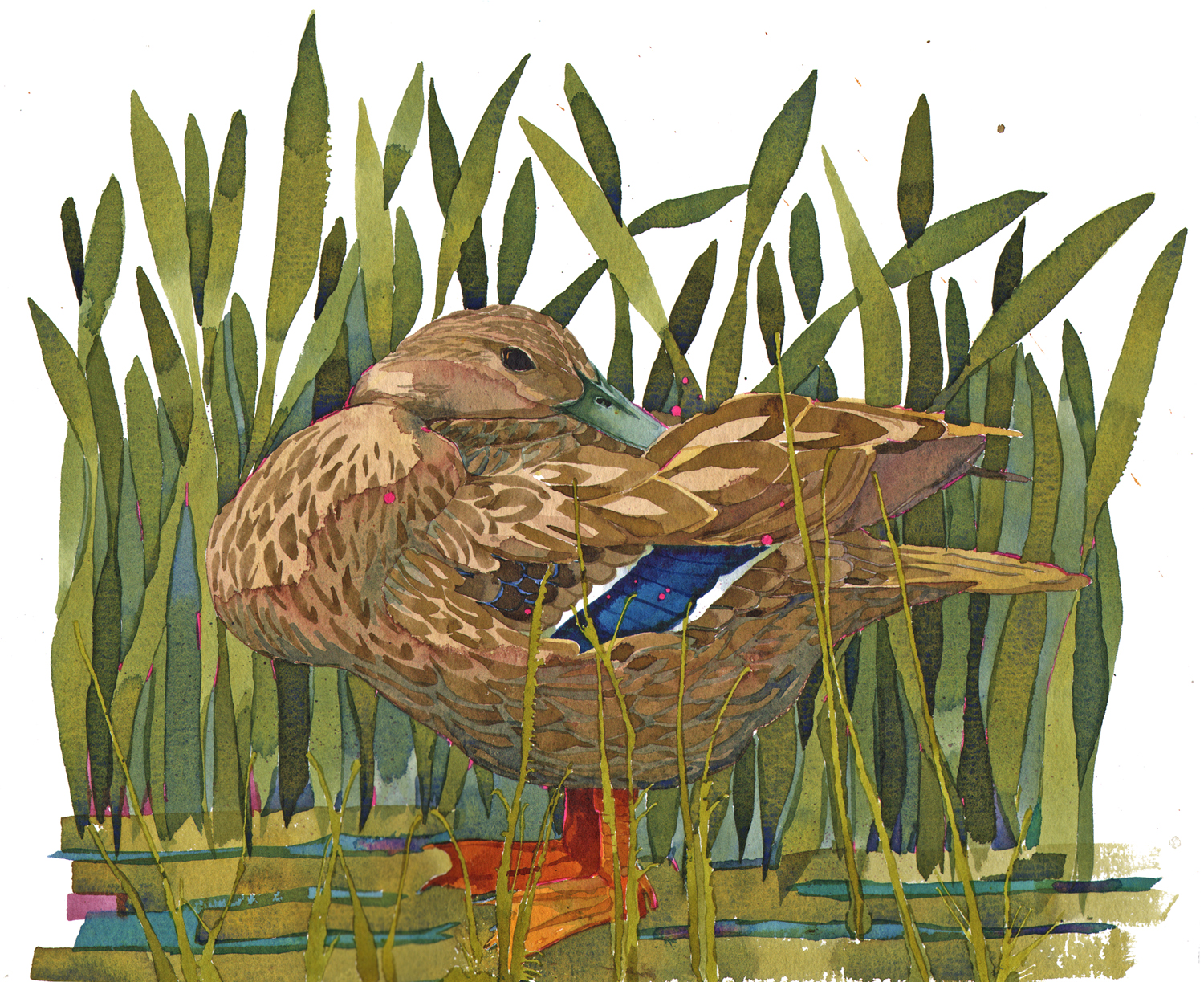 Mallard Duck SOLD image
