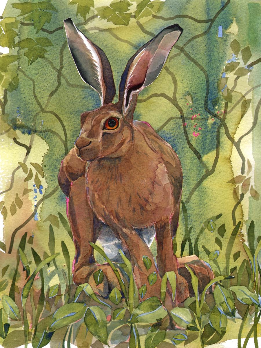 Hare II image