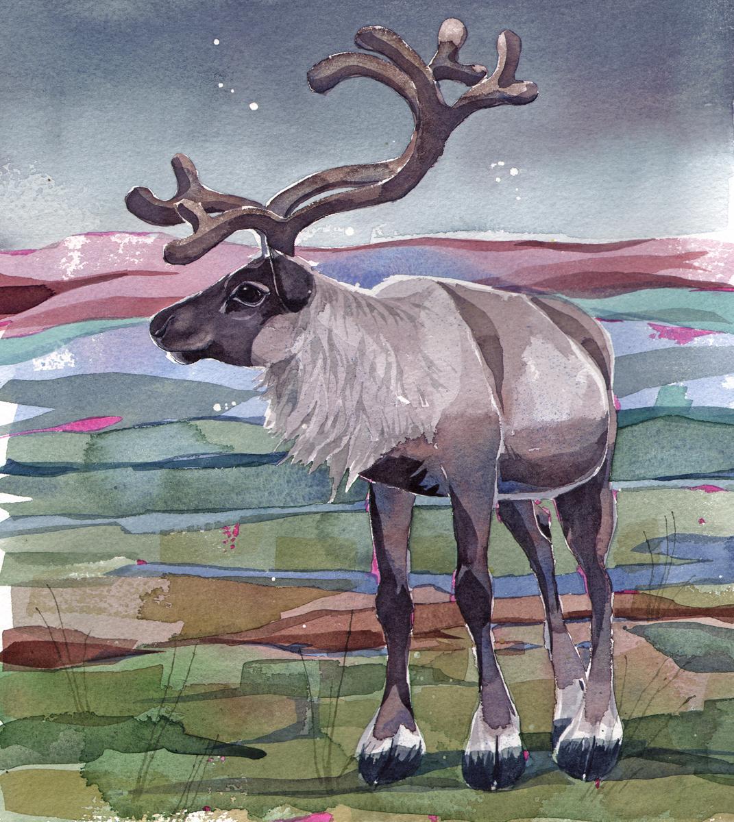 Reindeer Stag SOLD image