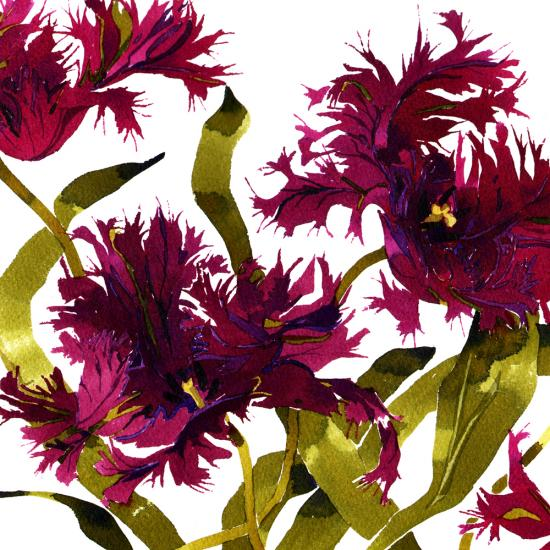Black Parrot Tulips Q5 image