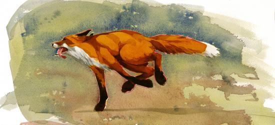 Running Fox image