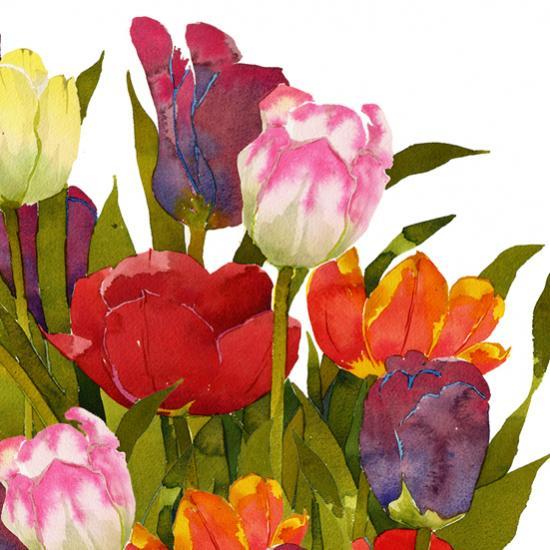 Tulips Q29 image