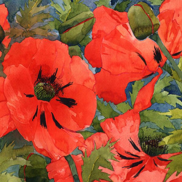 Summer Poppies Q59 image