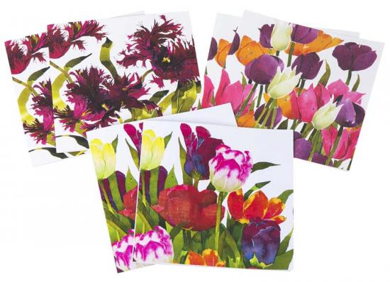 Tulips - mixed pack image