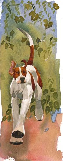 Foxhound image