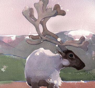 Reindeer Q3 image