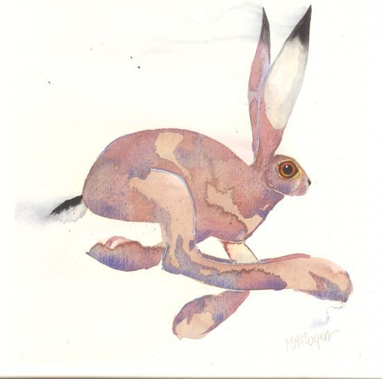 Hare Q34 image