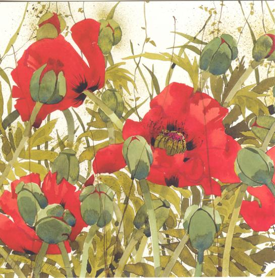 Oriental Poppies Q33 image