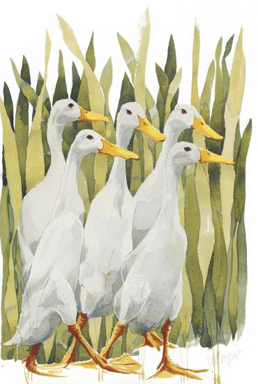 Indian Runner Ducks image