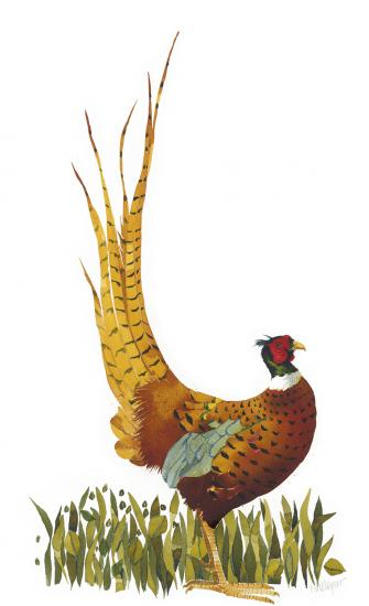 Ruffled Pheasant image