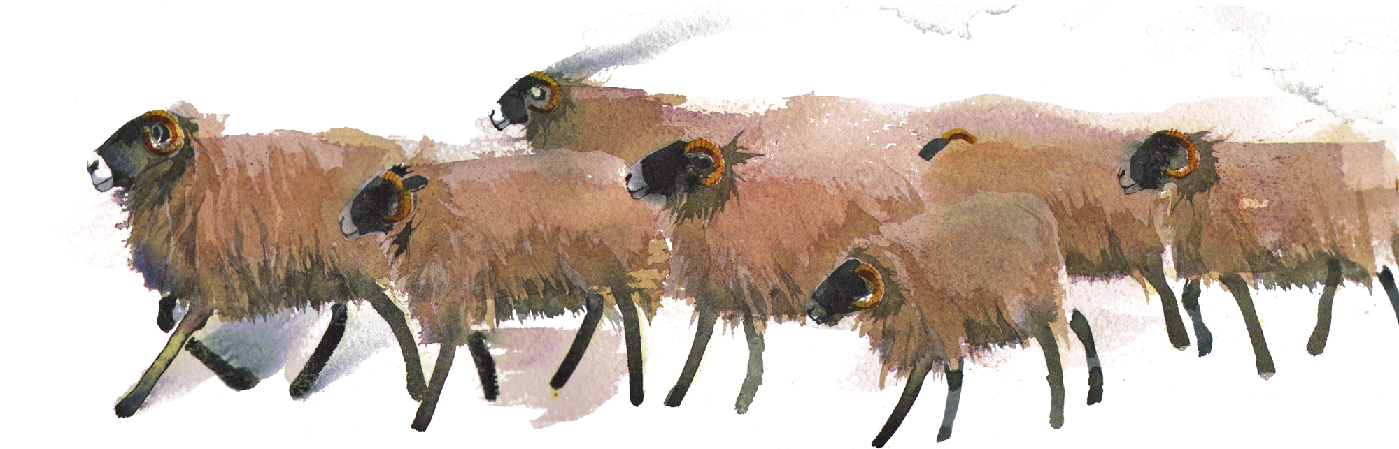 Swale Sheep, SOLD image