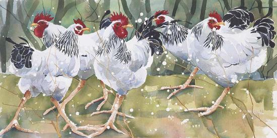 Light Sussex Flock L13 image
