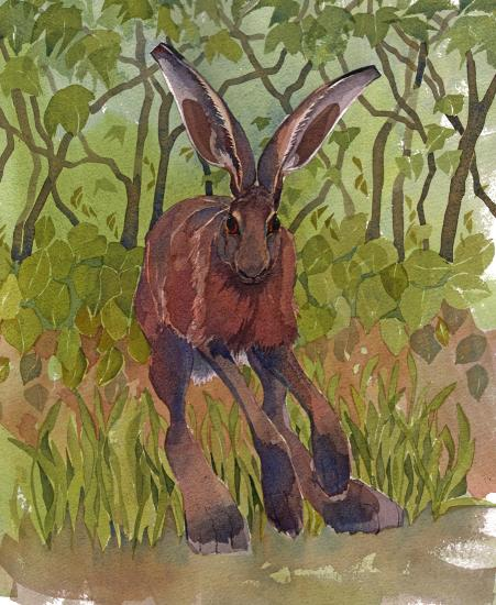 Hare, Trees image