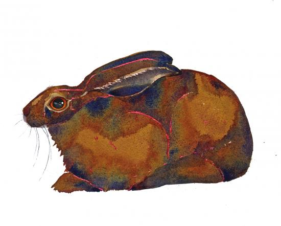 Resting hare image