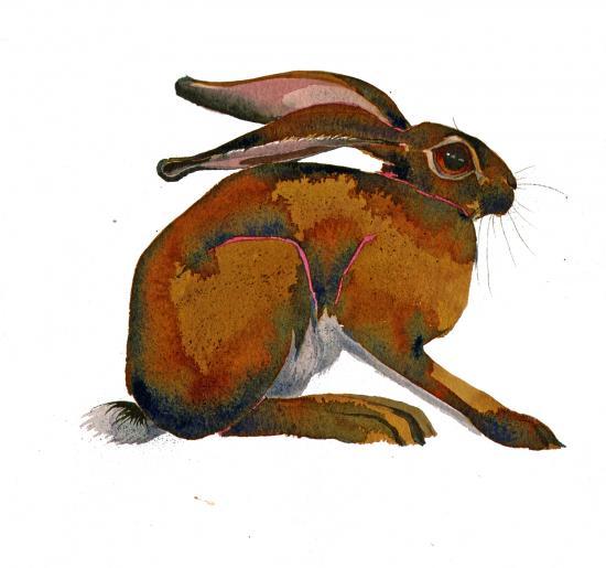 Sitting Hare image