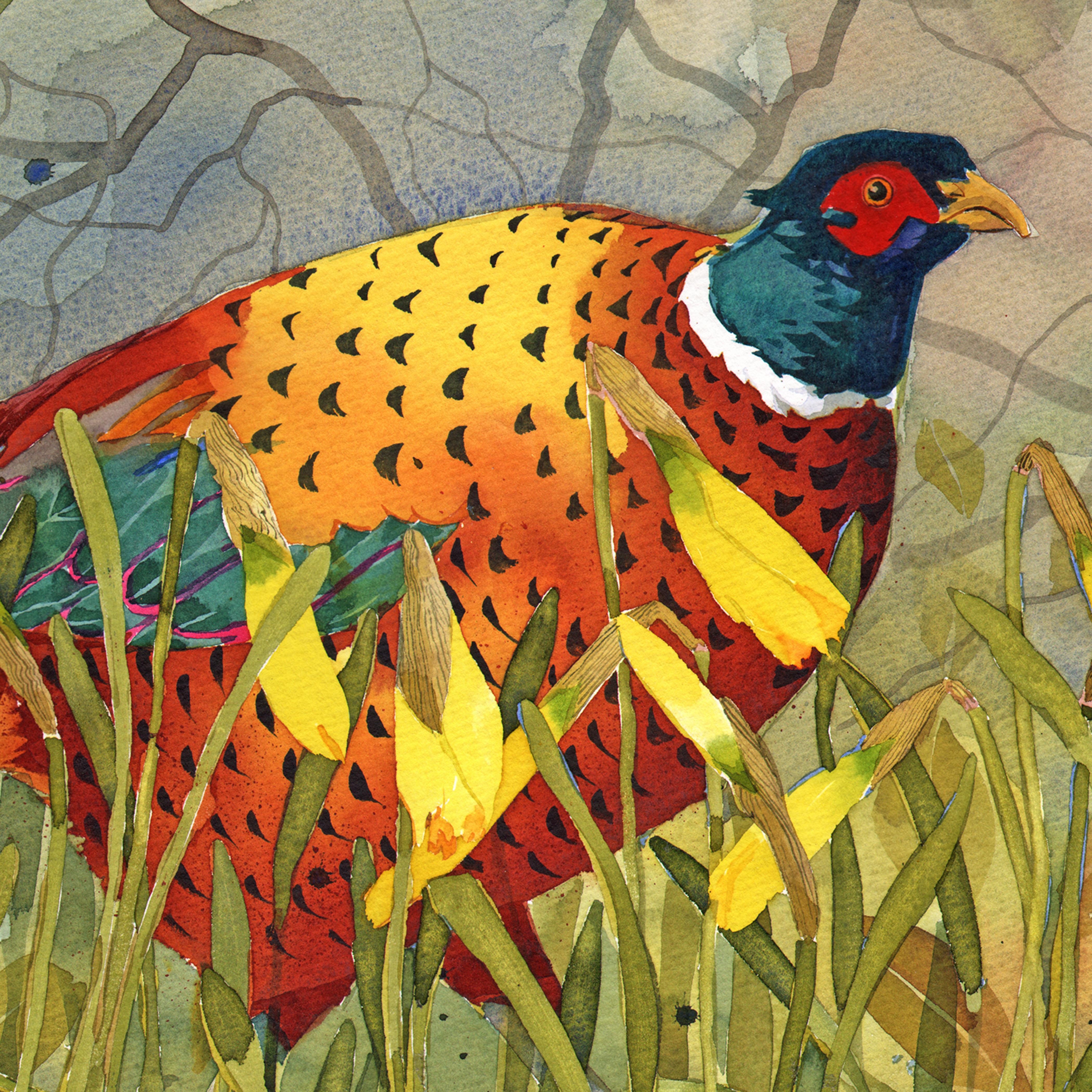 Pheasant, daffodils Q60 image