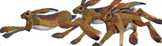 Racing Hares image