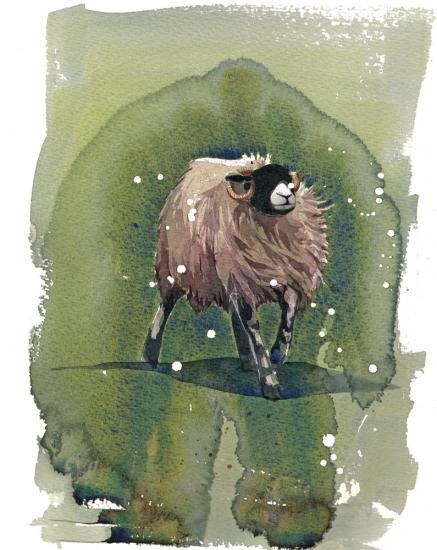 Swaledale Sheep  SOLD image