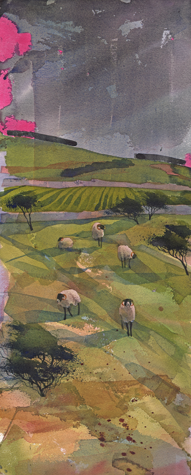 Grazing Swaledales  New sold  image
