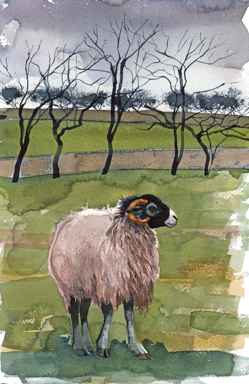 Swale Ewe SOLD image