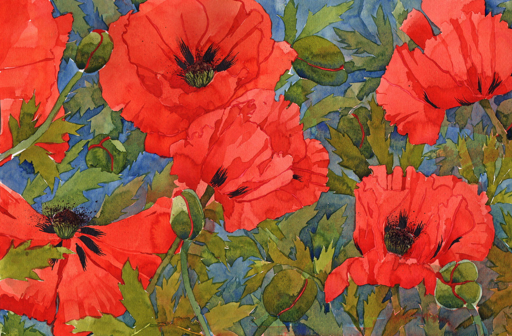 Oriental Poppies image