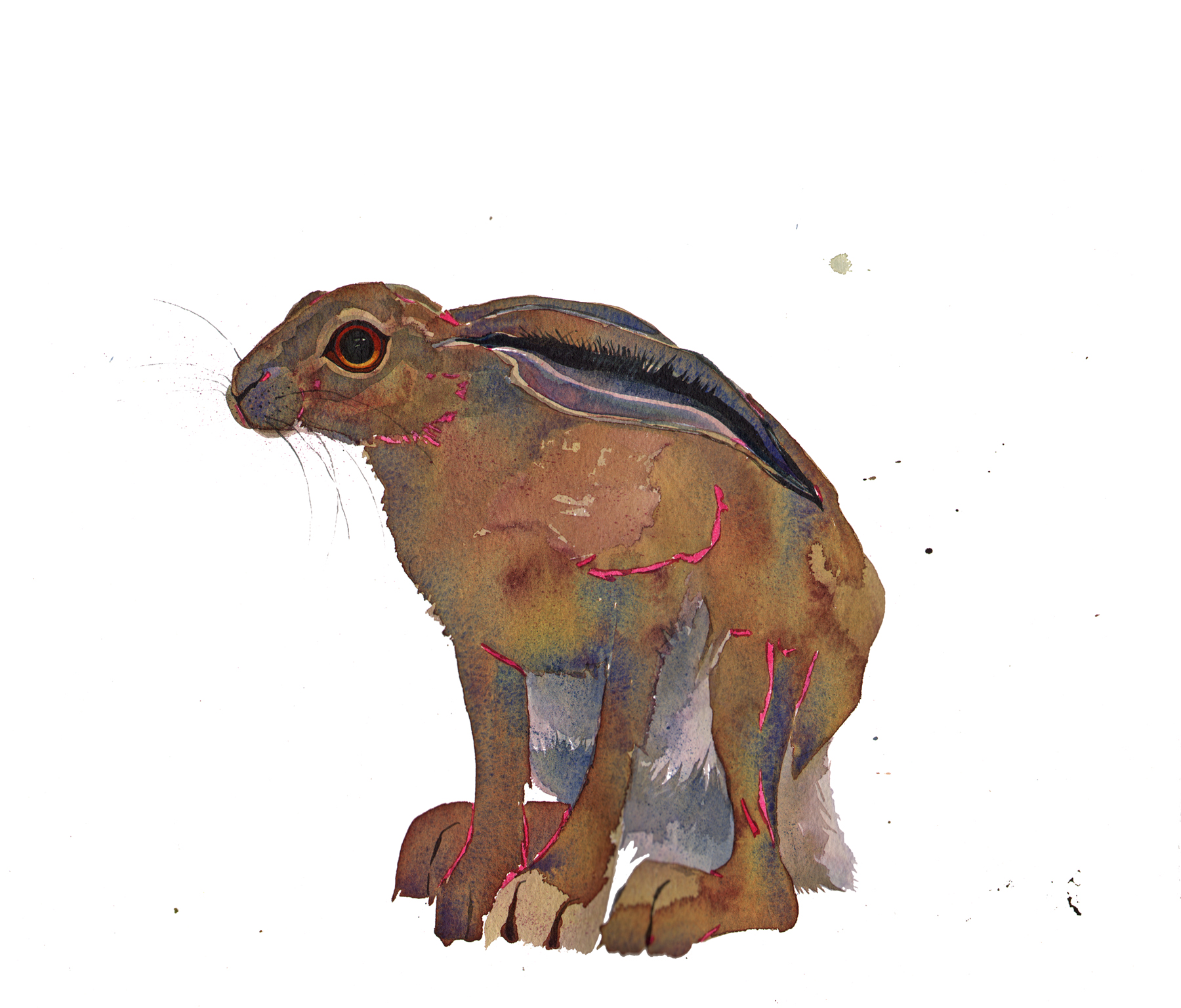 Hare, Sitting, New image