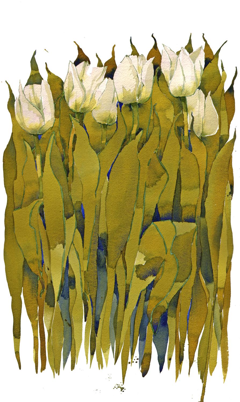 White Tulips image
