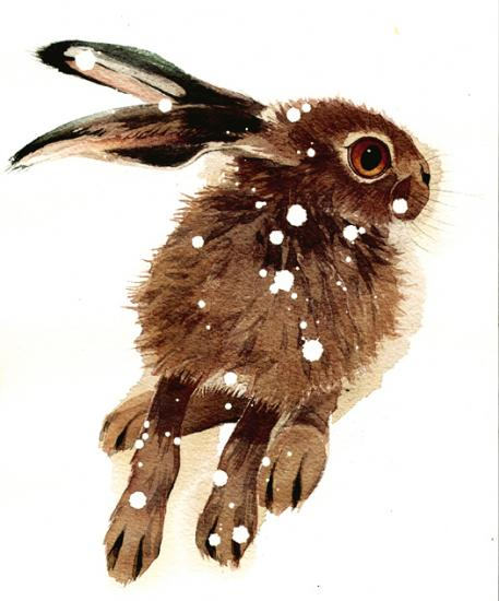 Anxious Leveret Q31 image