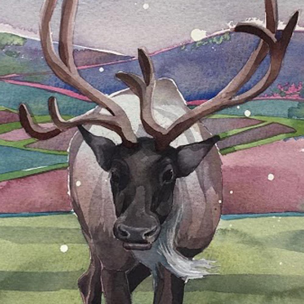 Bull Reindeer Q54 image