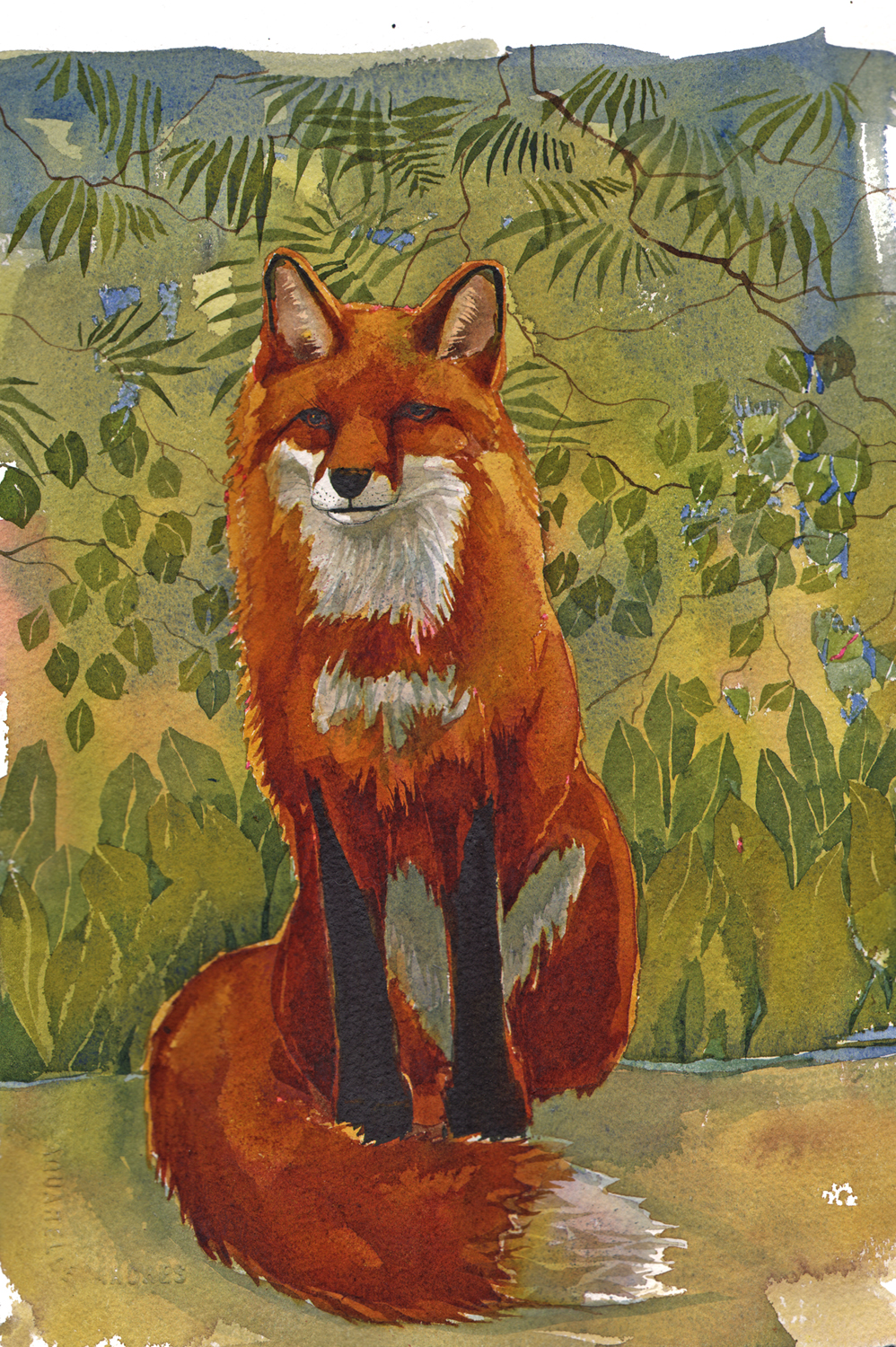 Fox, New image