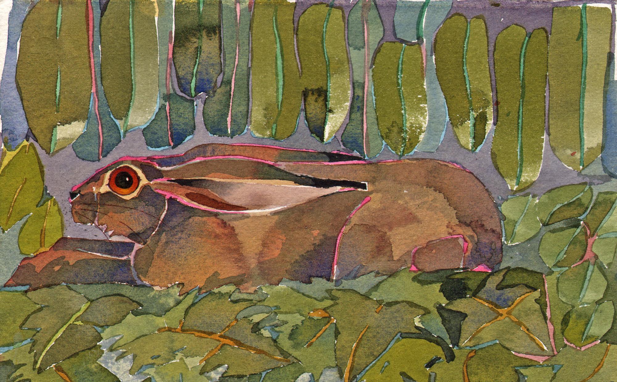 Hare, lying image