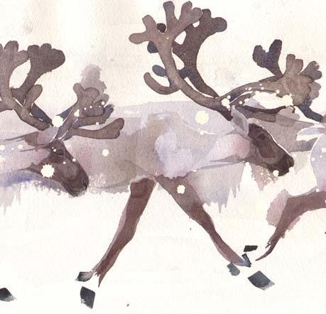 Reindeer Q17 image