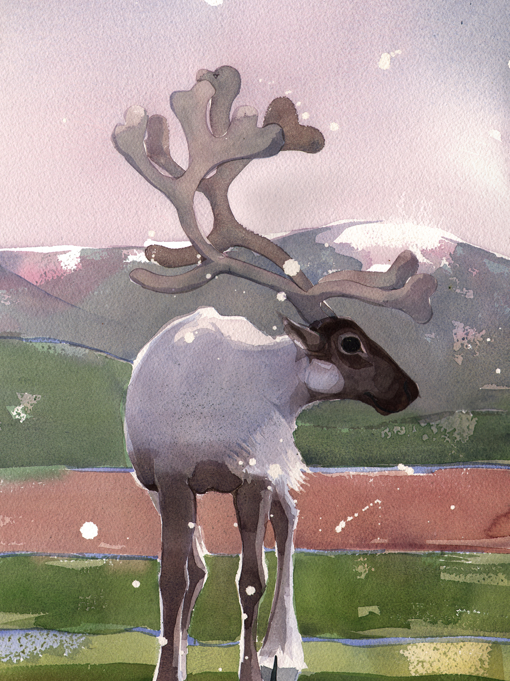 Journal, Reindeer image
