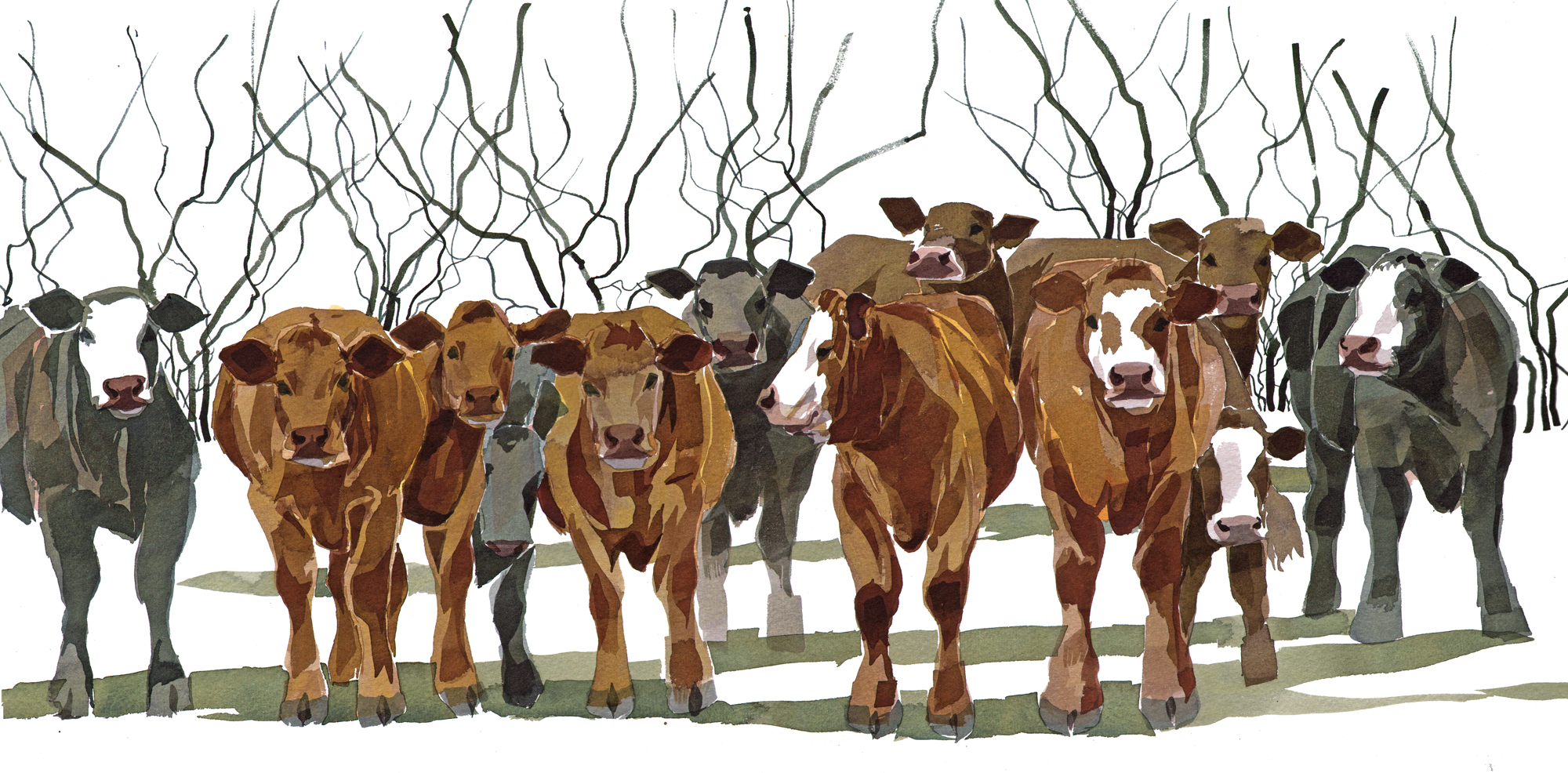 Cattle SOLD image