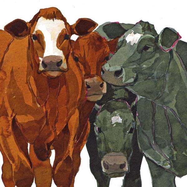 Fat Cattle Q58 image