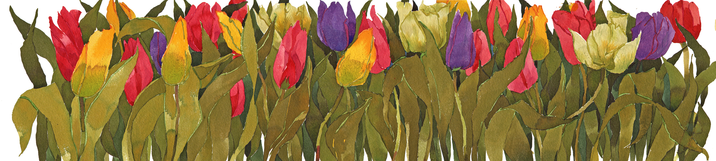 Long Tulips, New image
