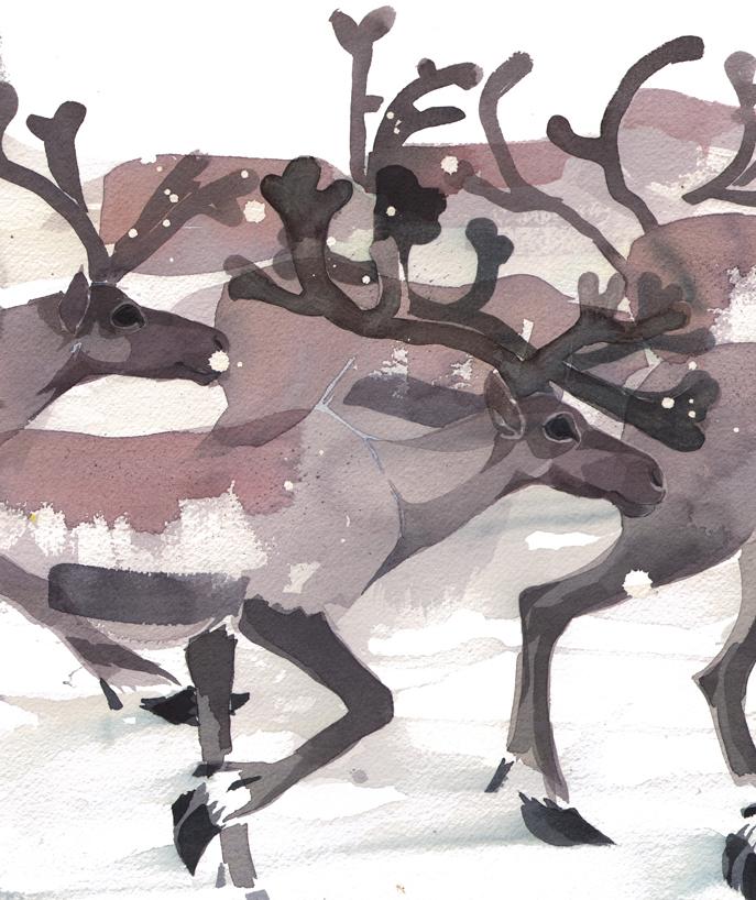 Herding Reindeer image