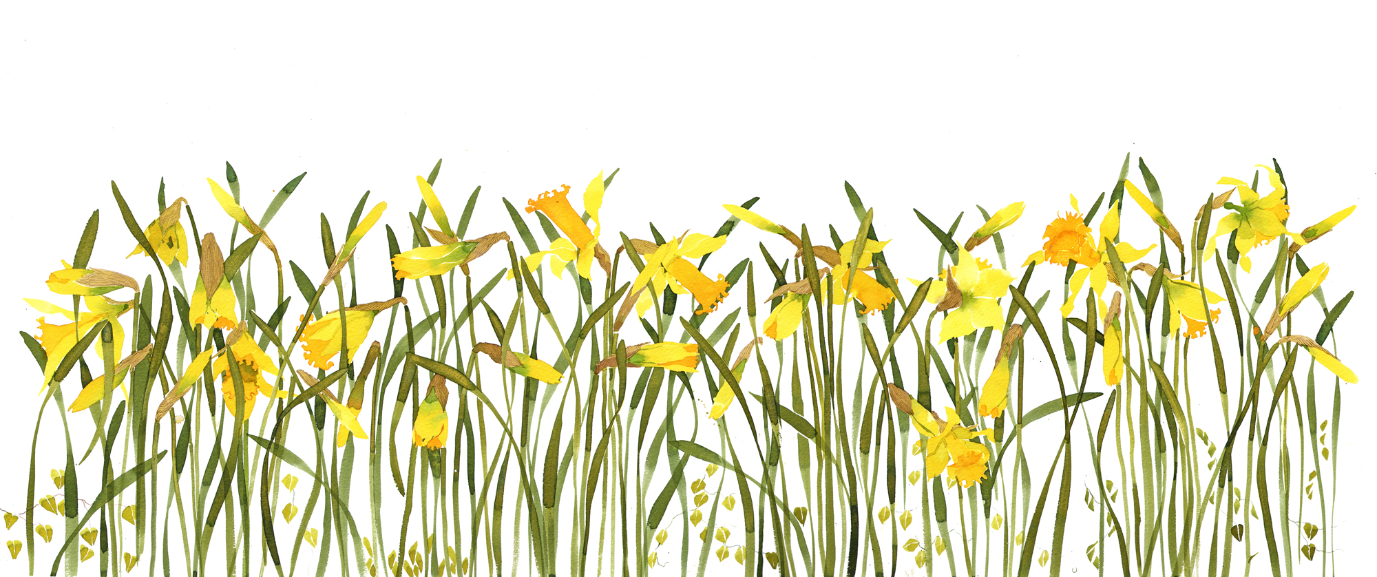 A metre of daffodils! SOLD image