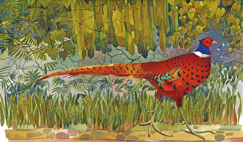 Pheasant III, new image