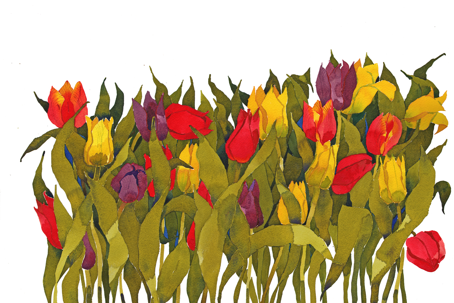 Riot of colour,Tulips I, New image