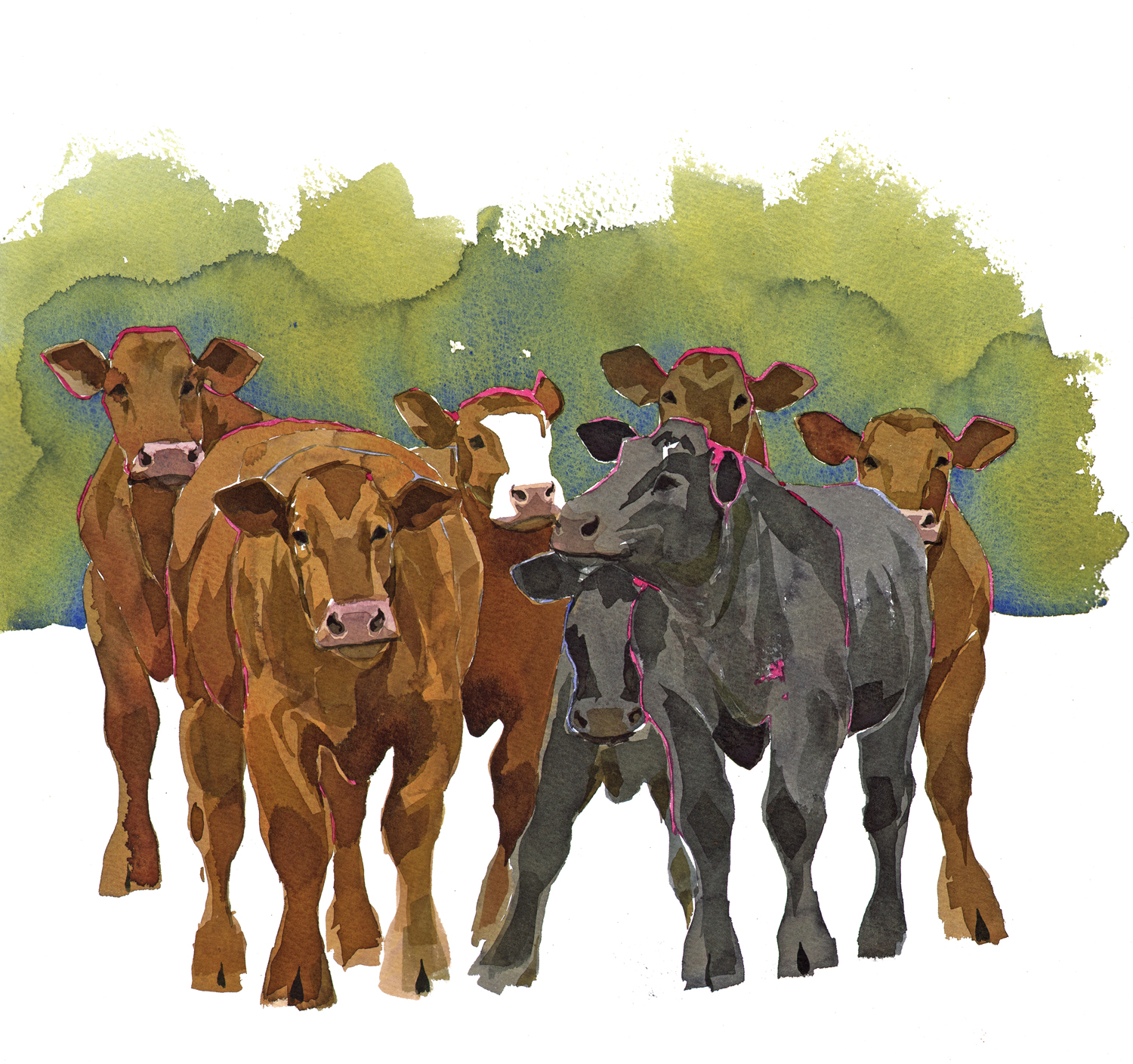 Young Cattle SOLD image