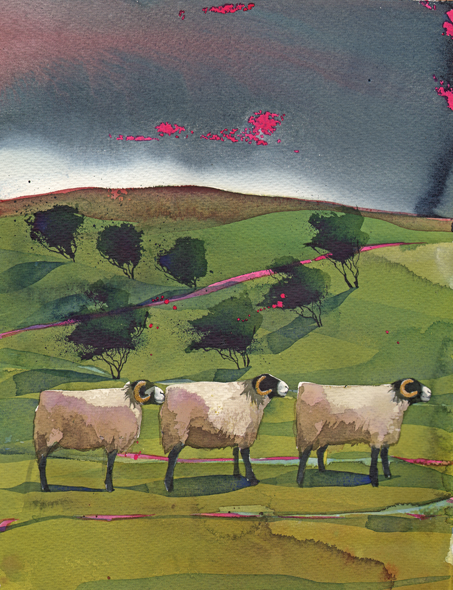 Three Swaledales SOLD image