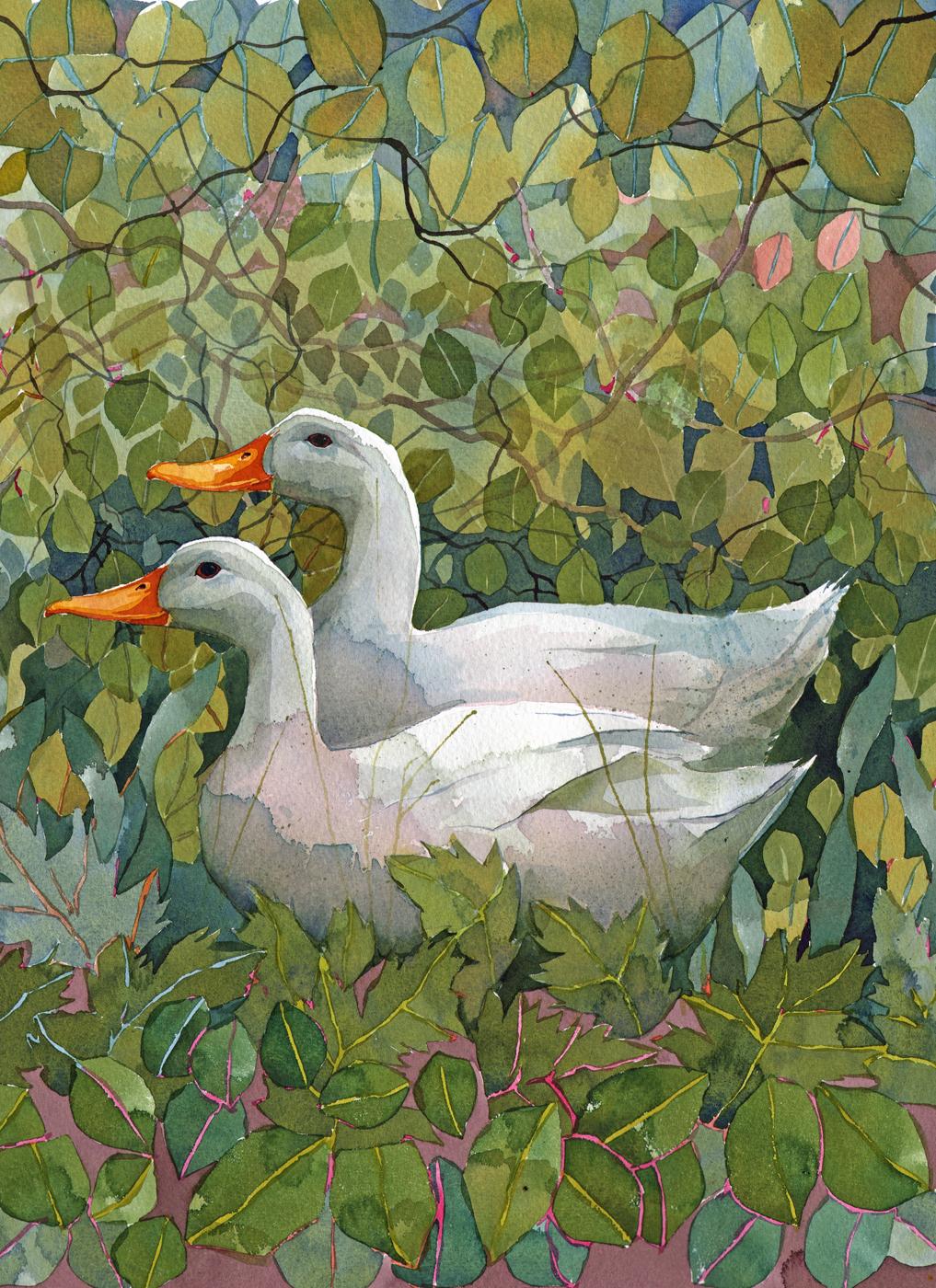 Aylesbury Ducks  image