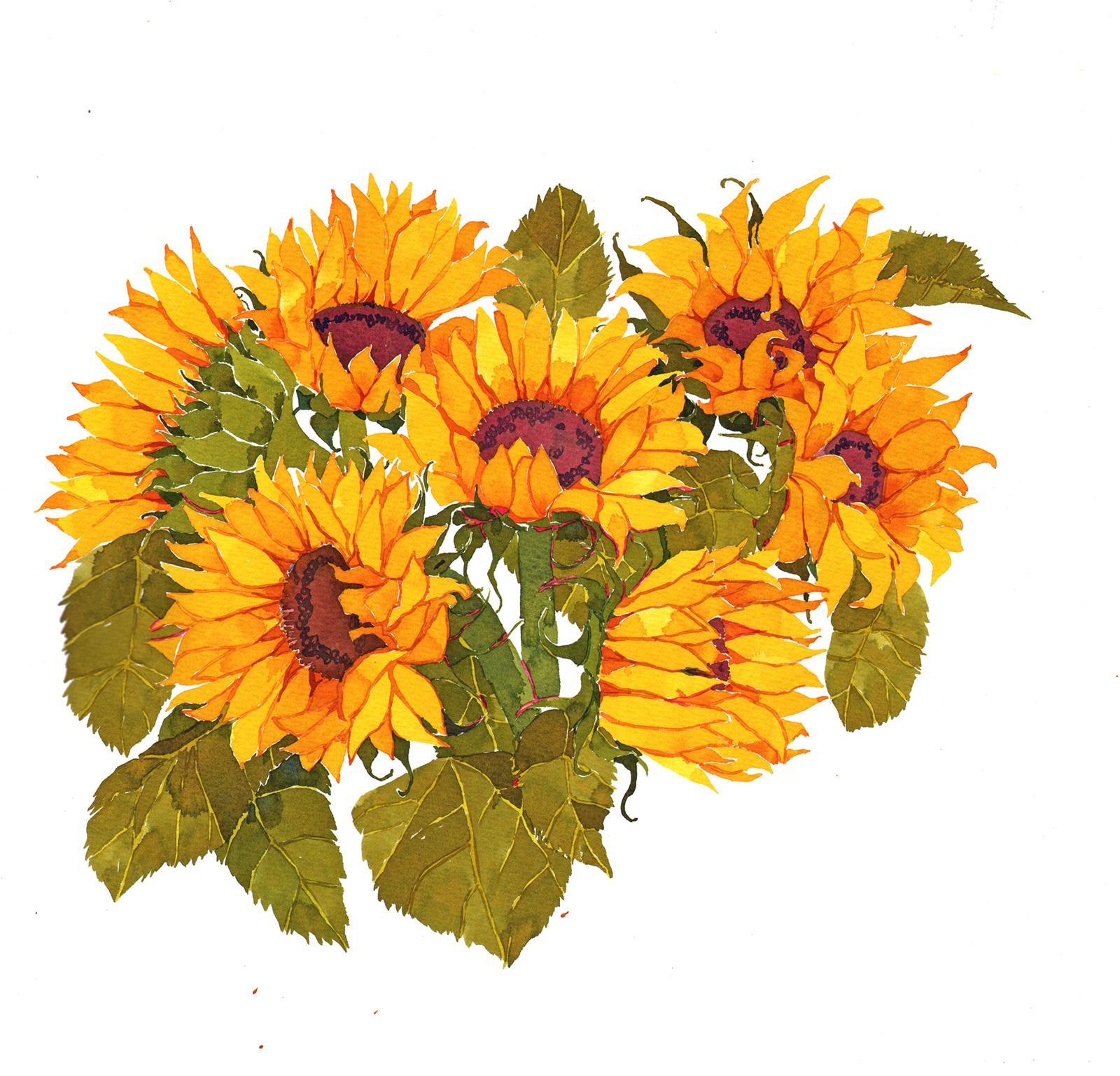 Sunflowers II SOLD image