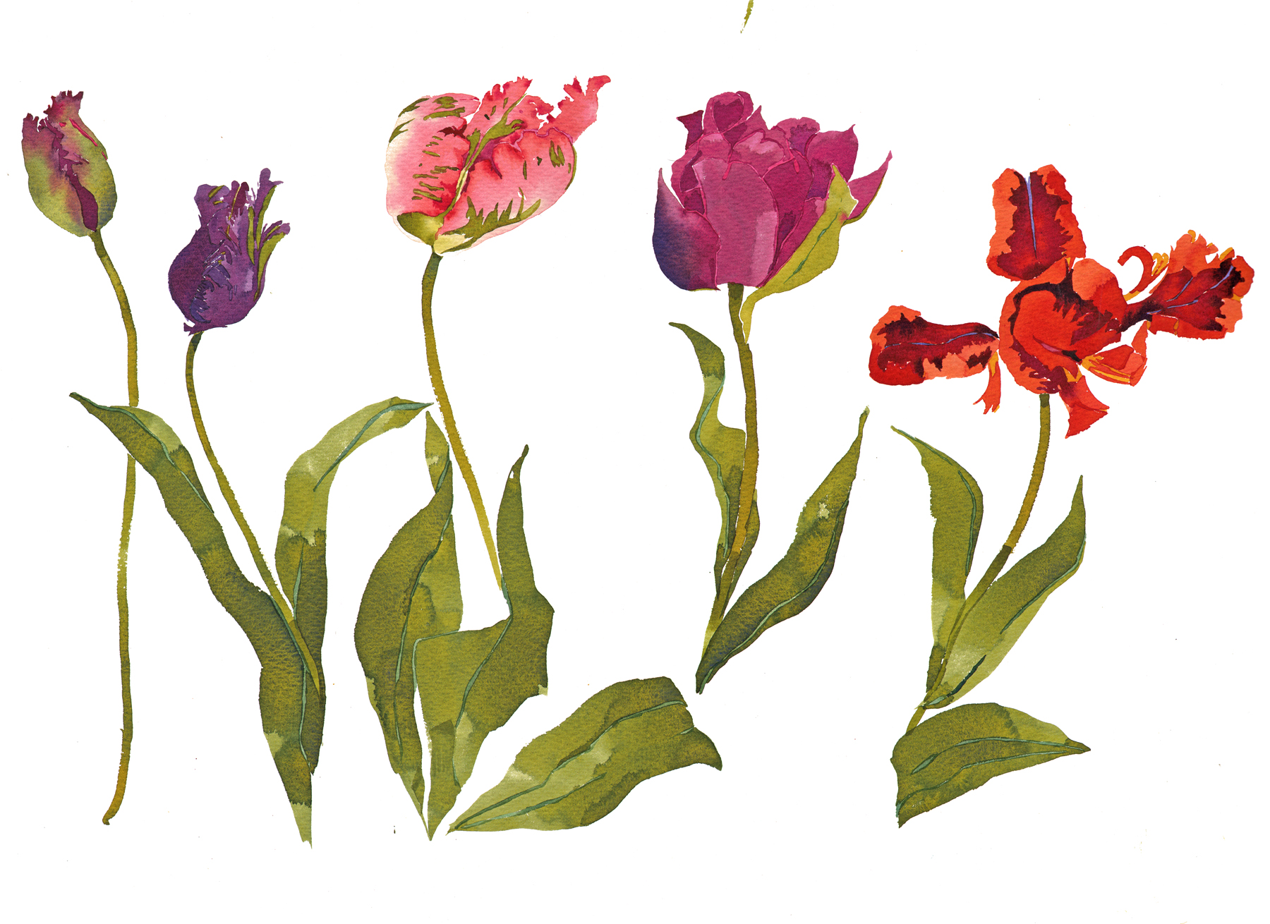 Five Tulips image