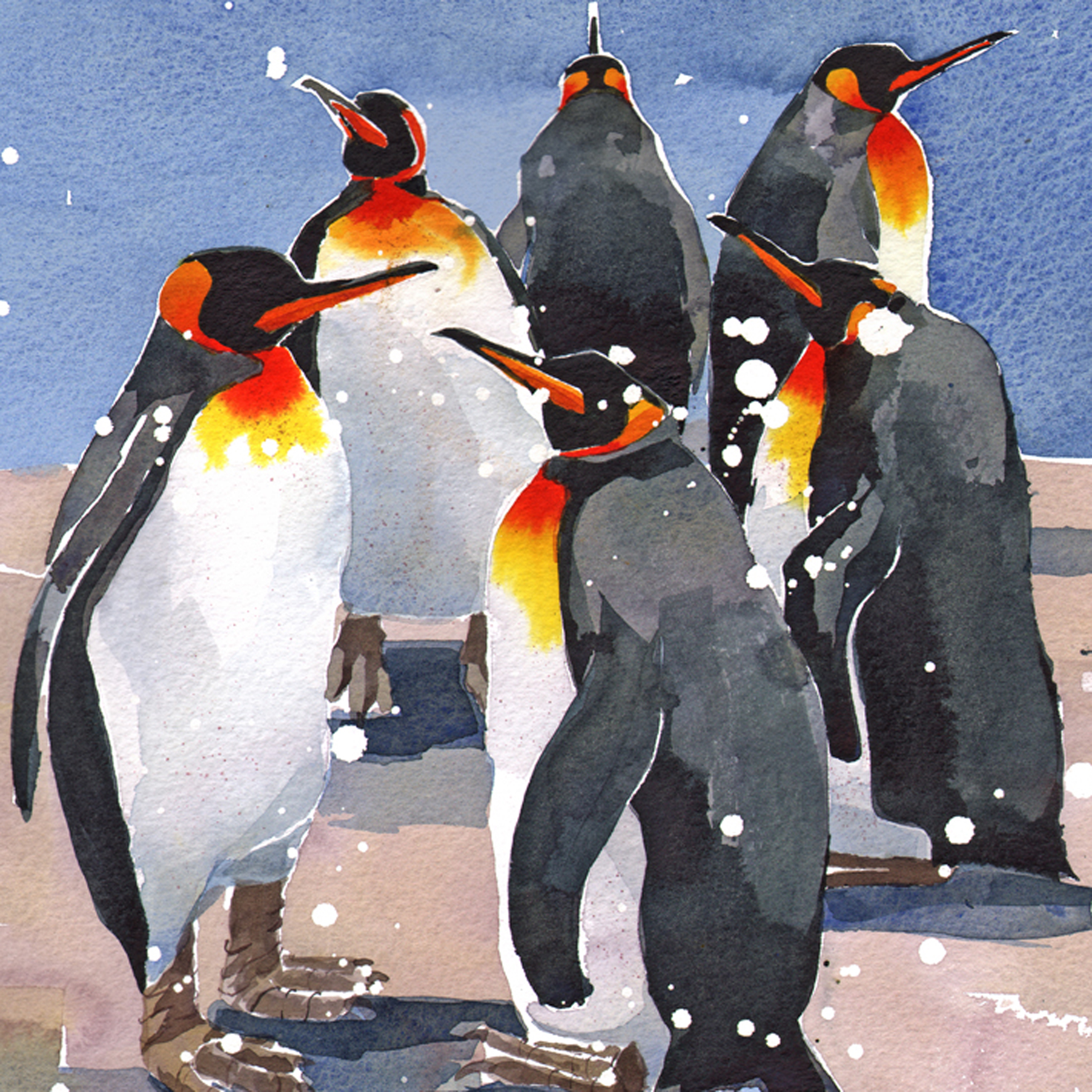 King Penguins Q53 image