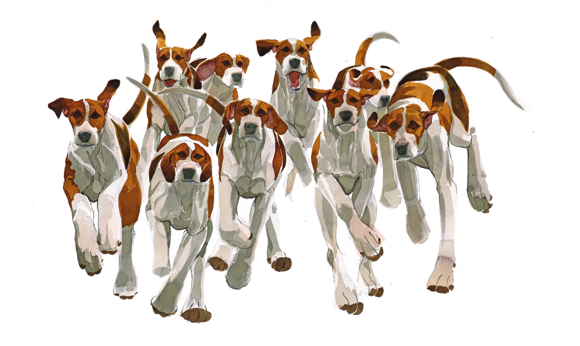 Hounds image