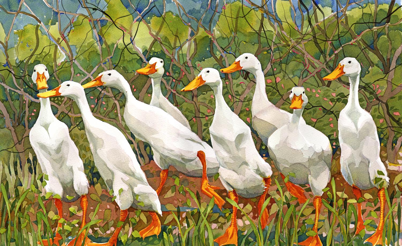 Indian Runner Ducks image