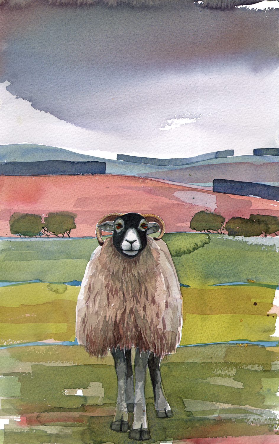 Lone Sheep image