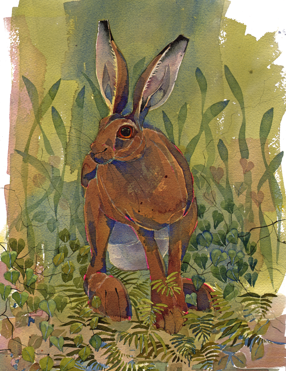 Hare image